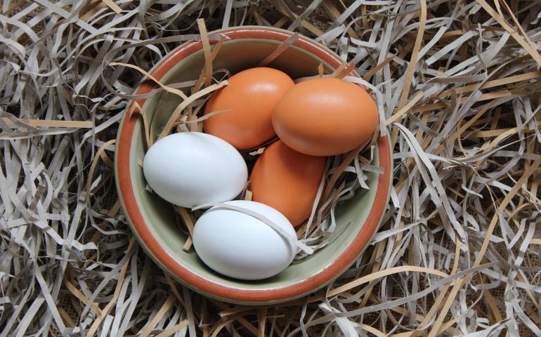 Red blood spots in eggs