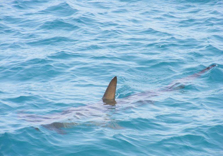 Is Shark Fish Halal?